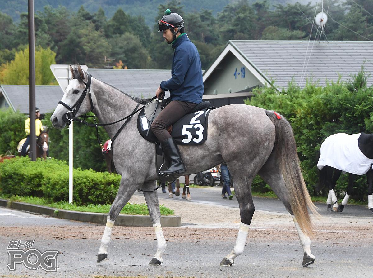 キャットタングの馬体写真
