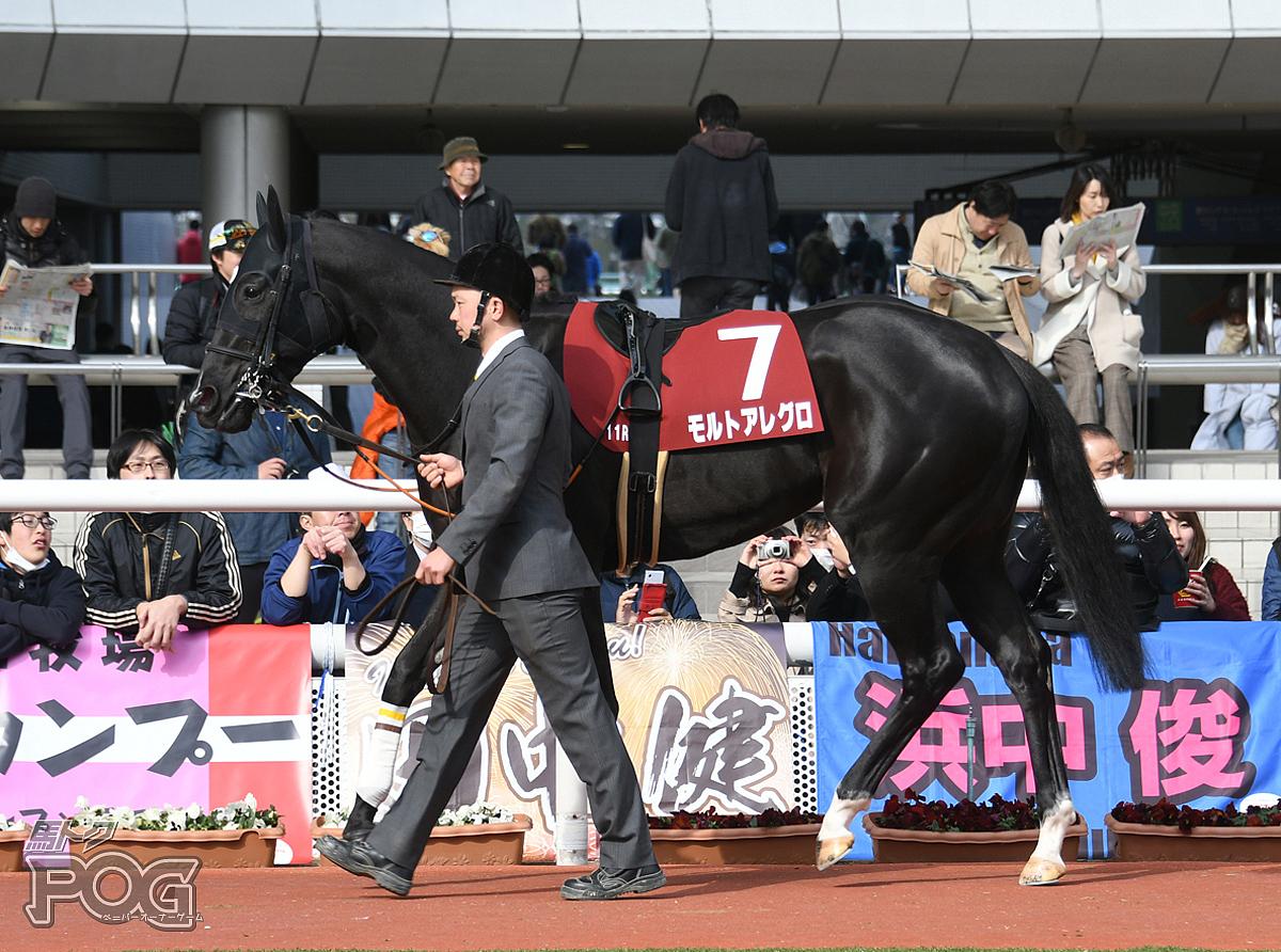 モルトアレグロの馬体写真