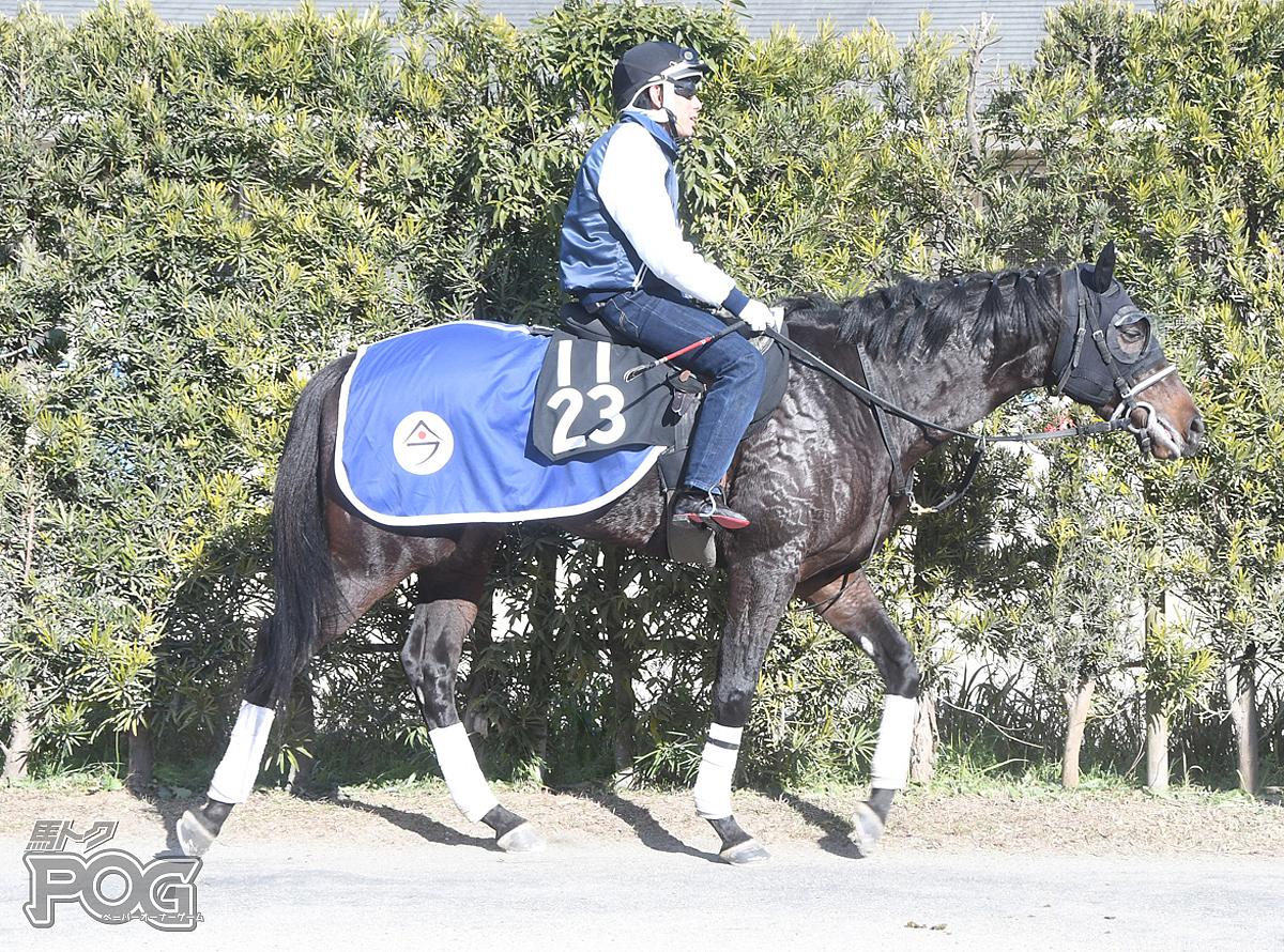 ララペイフォワードの馬体写真