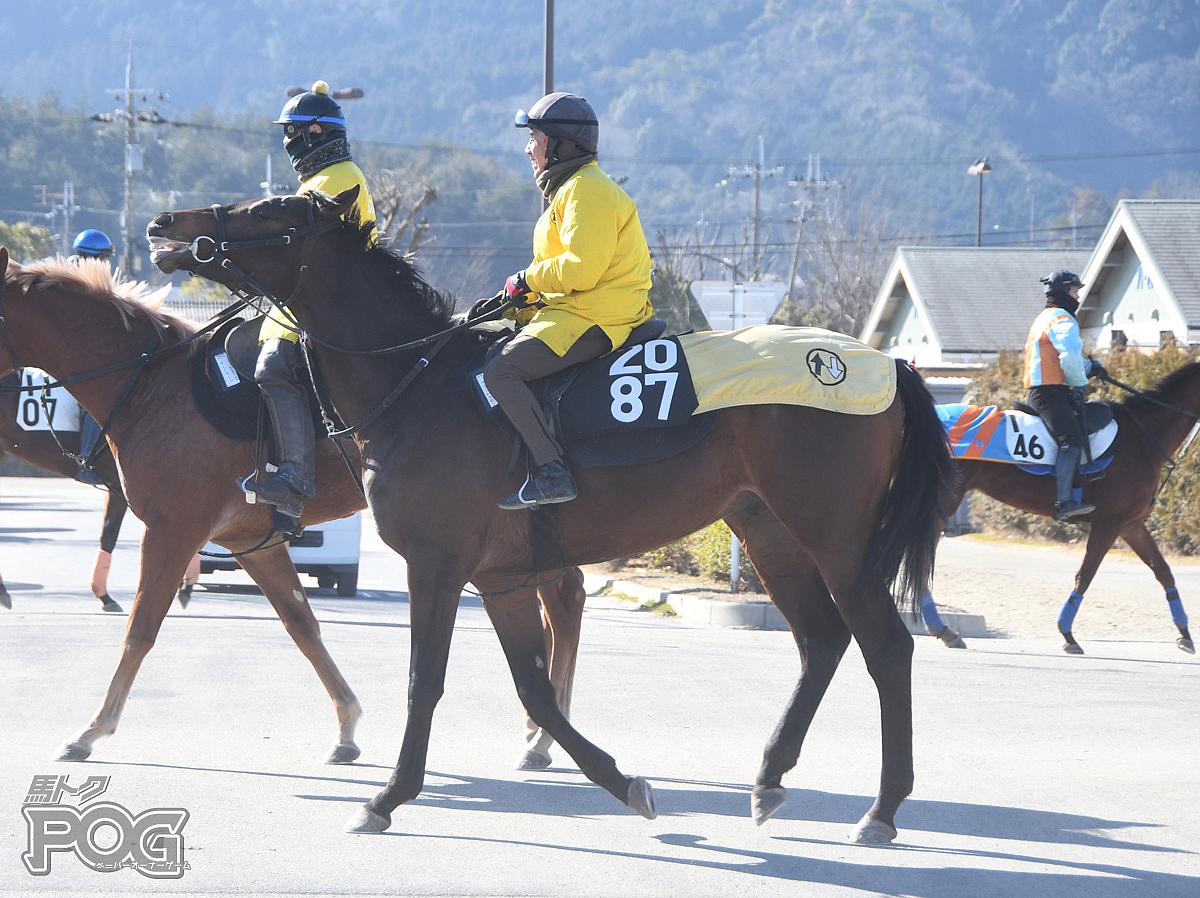 グランドエローの馬体写真