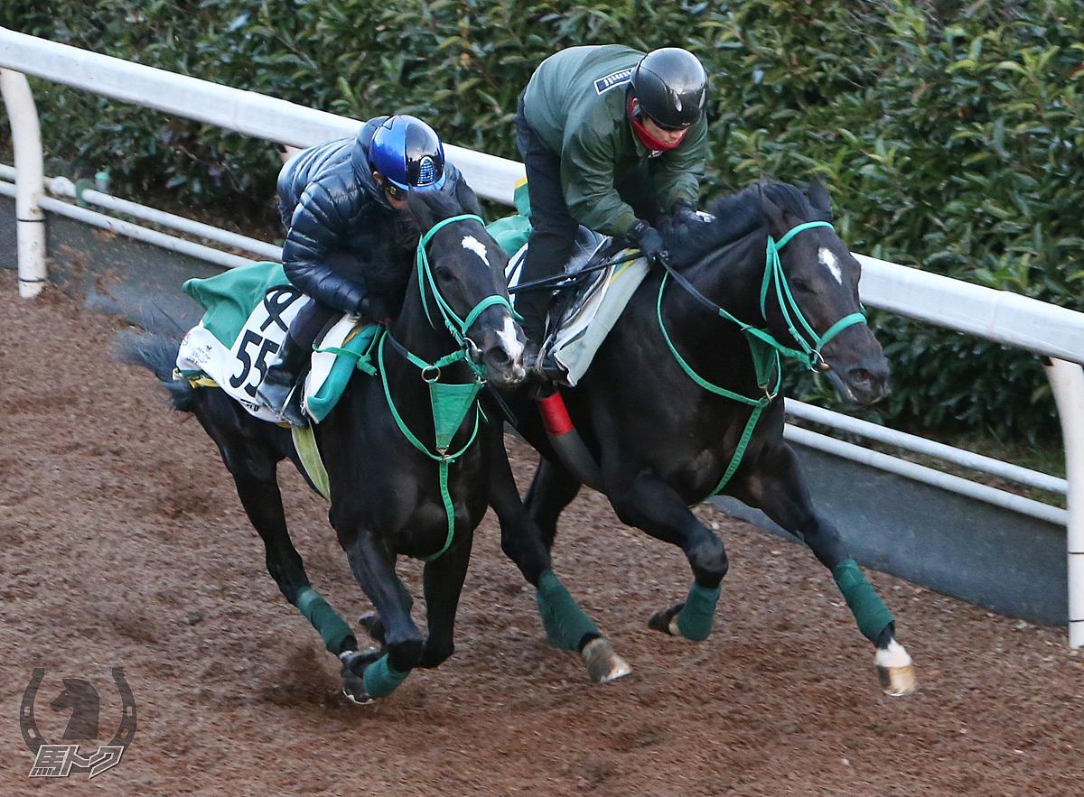 タニノフランケルの馬体写真