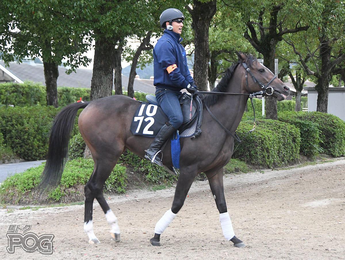 モトカの馬体写真