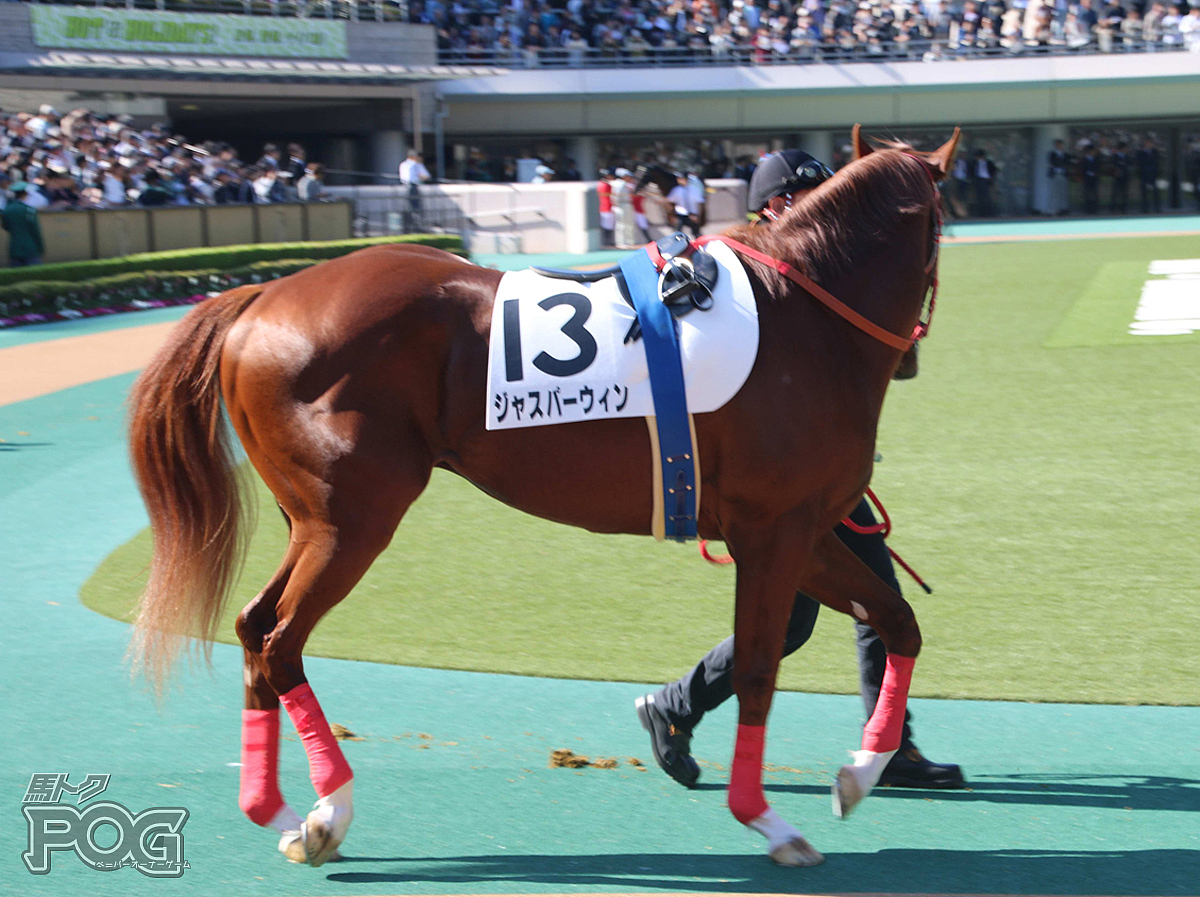ジャスパーウィンの馬体写真