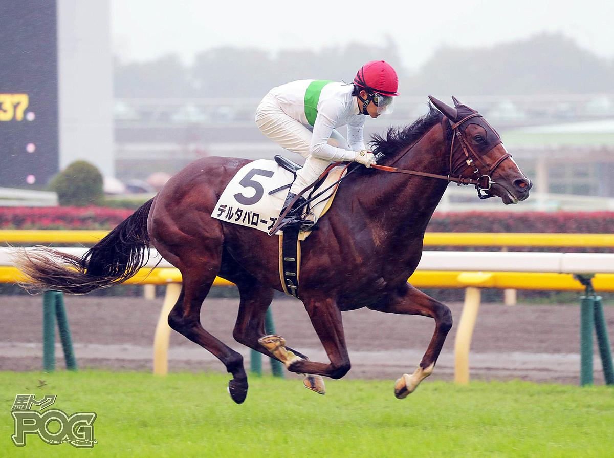 デルタバローズの馬体写真