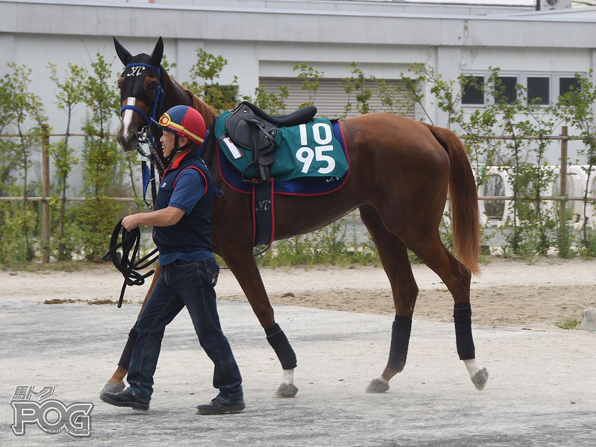 パールウェディングの馬体写真