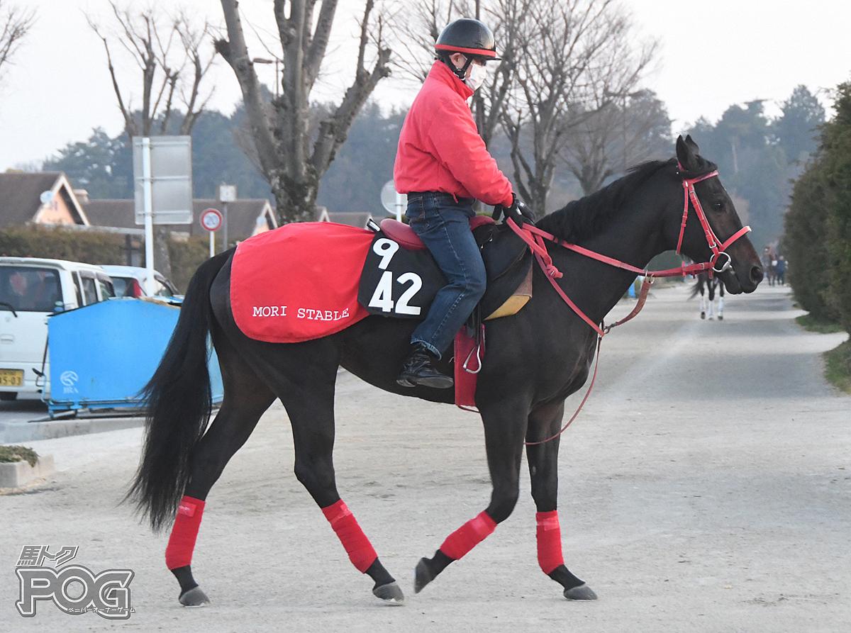 ホクリュウオウの馬体写真
