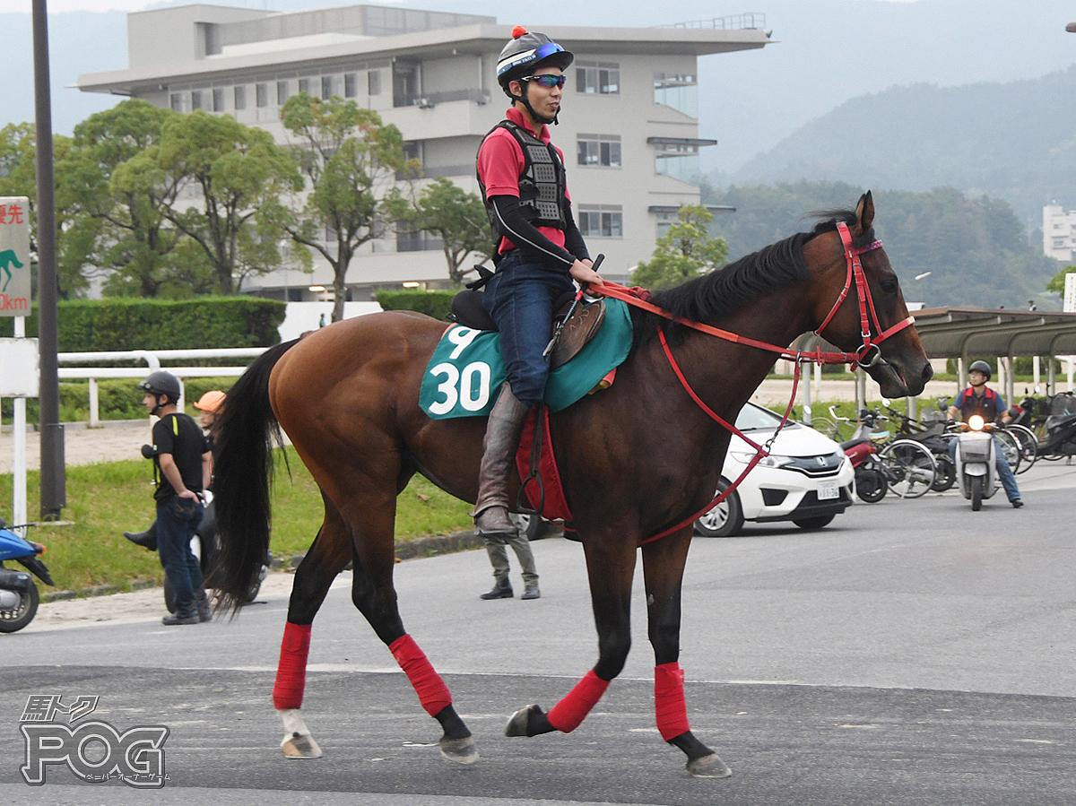 ジャスパープリンスの馬体写真