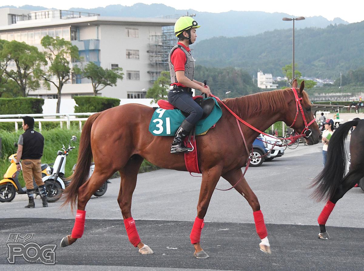 ジャスパーエイトの馬体写真