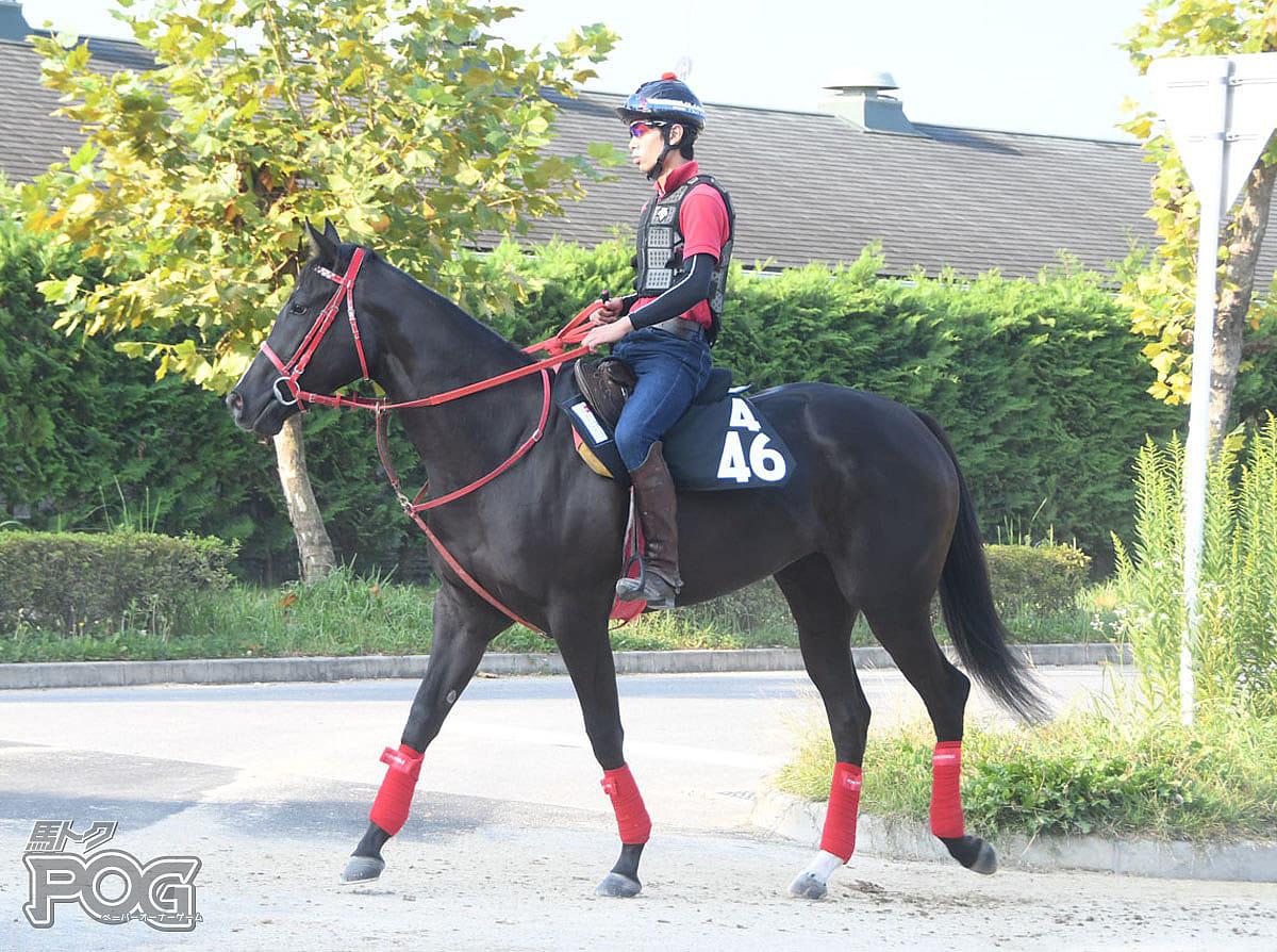 ジャスパーモアの馬体写真