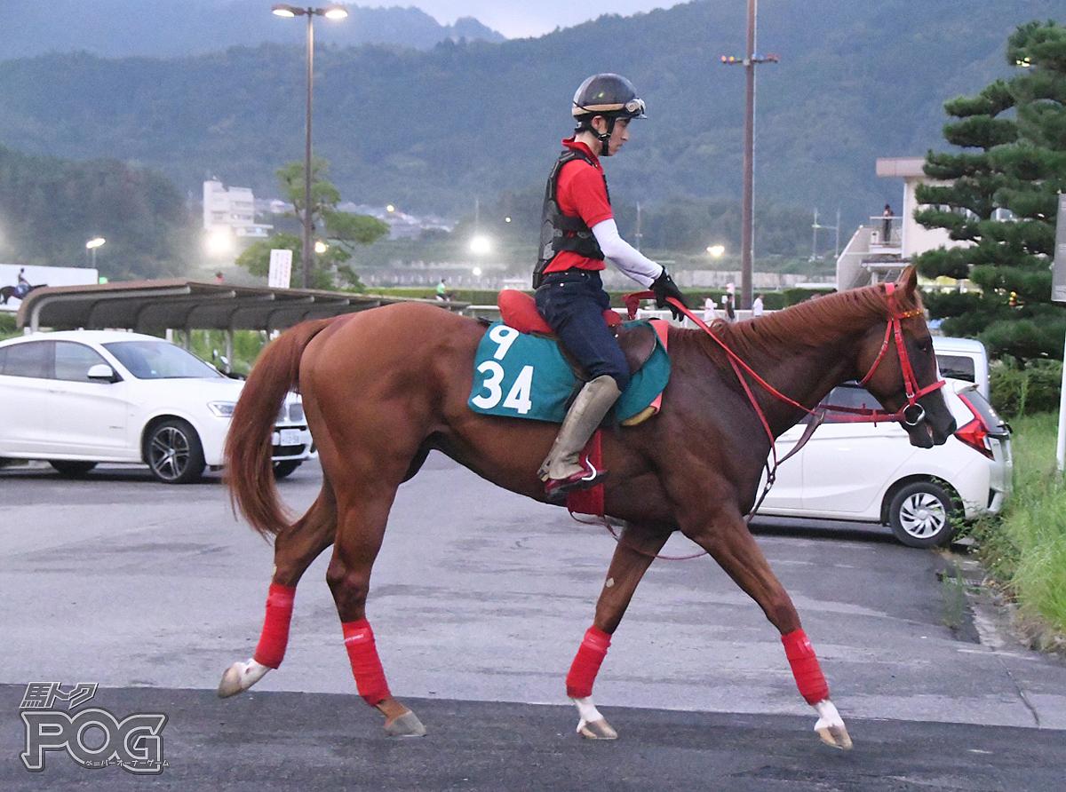 ケンデスティニーの馬体写真