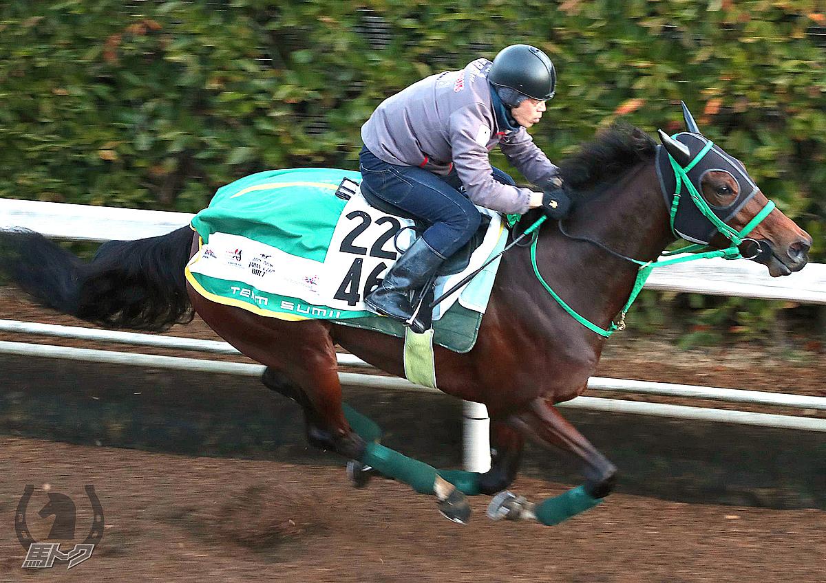 ランドネの馬体写真