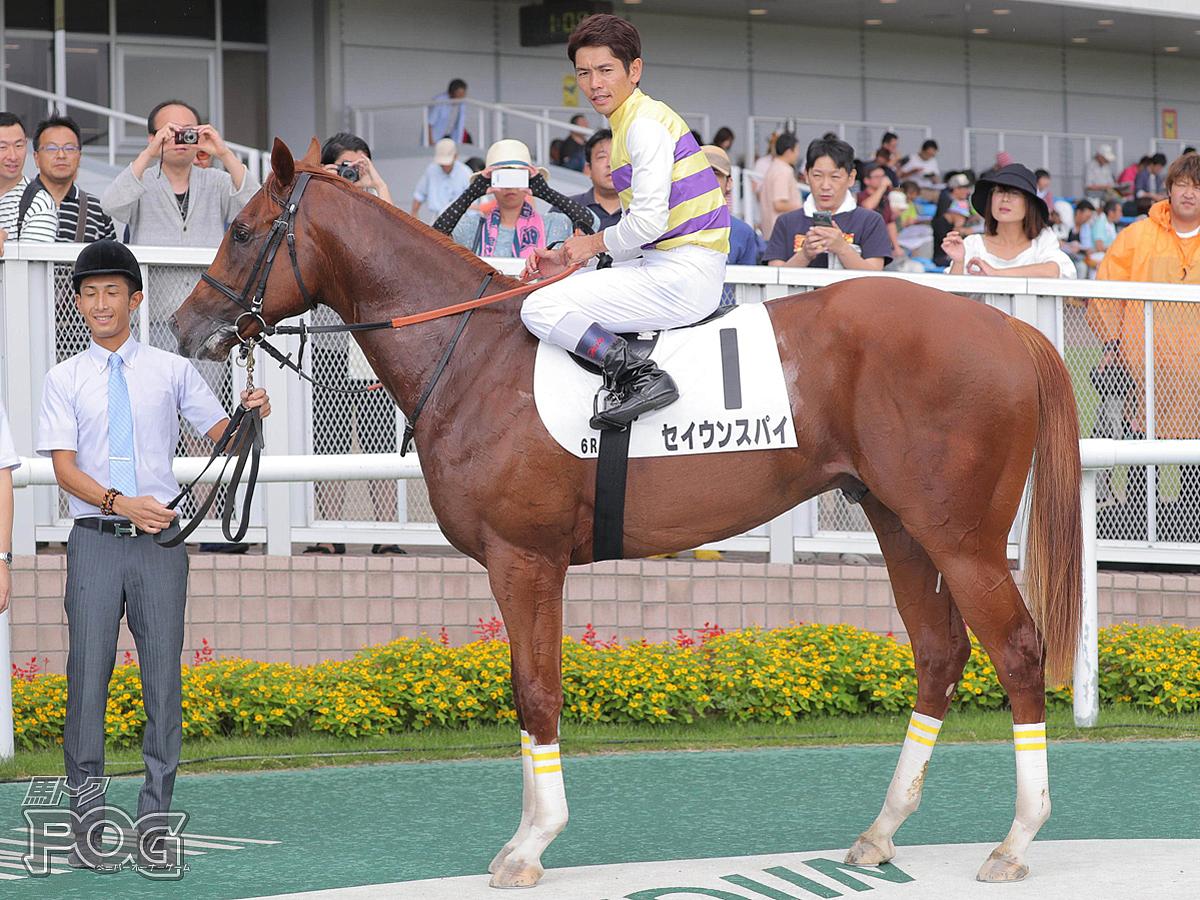 セイウンスパイの馬体写真