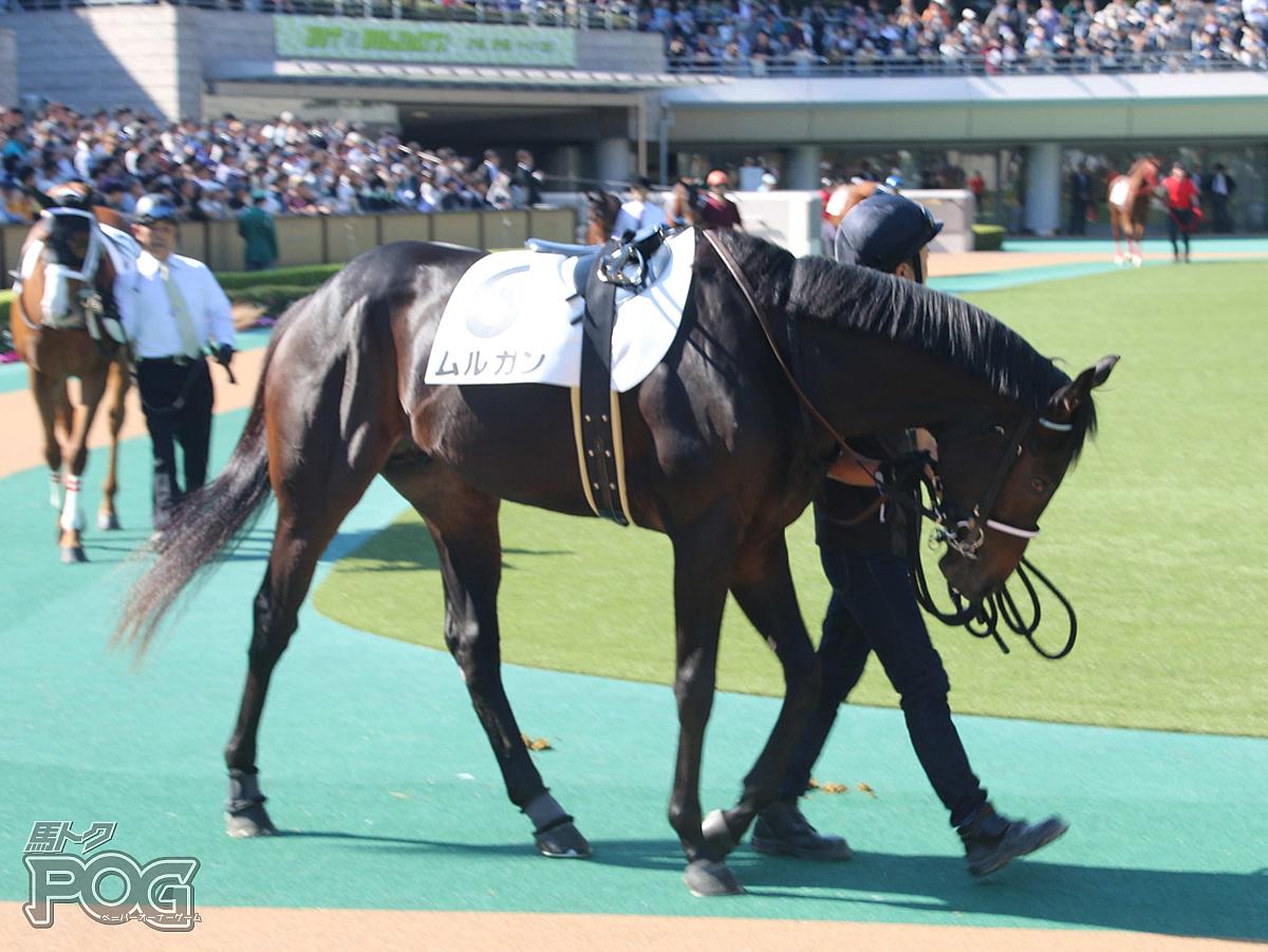 ムルガンの馬体写真