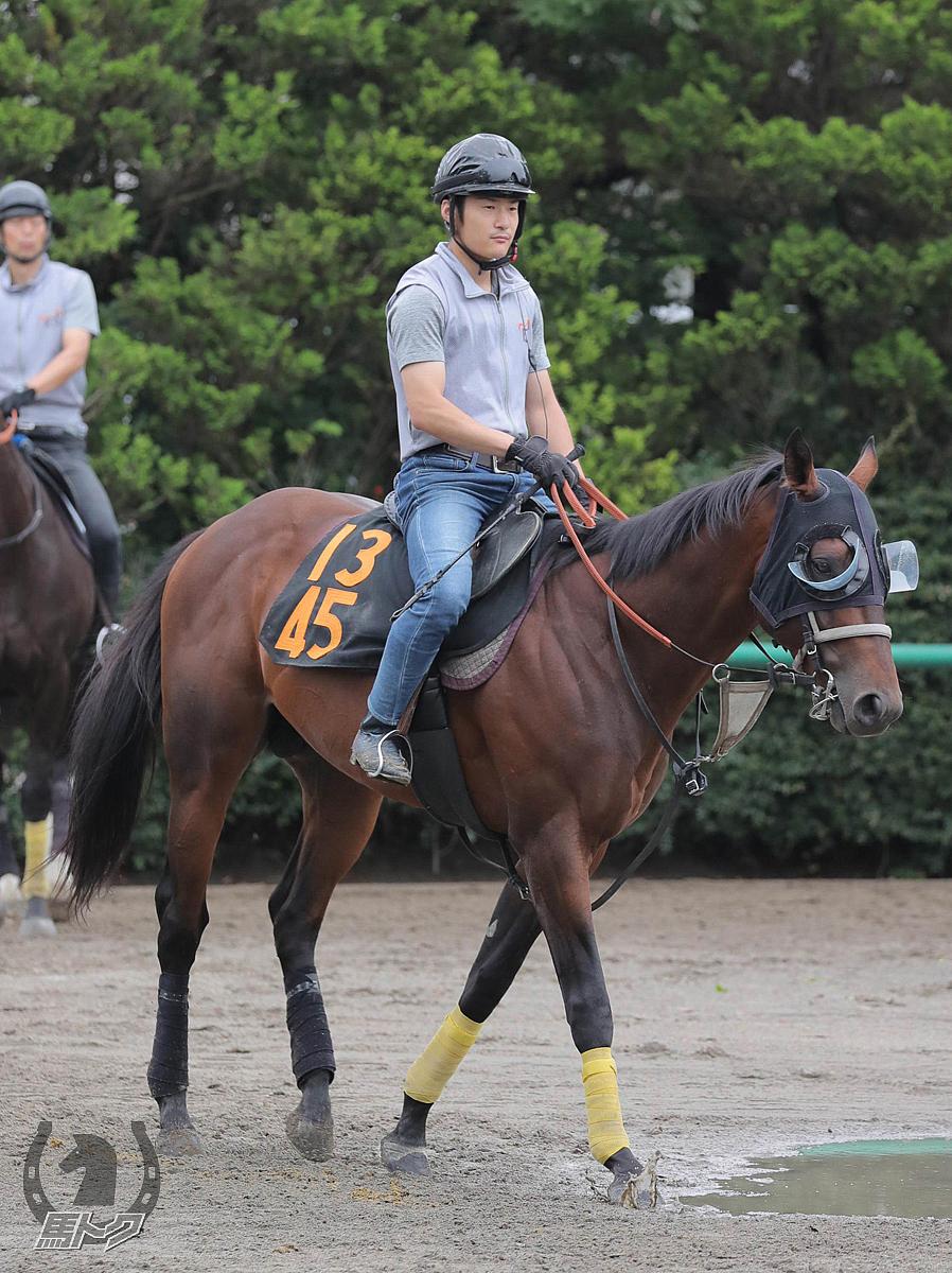 リョーノテソーロの馬体写真