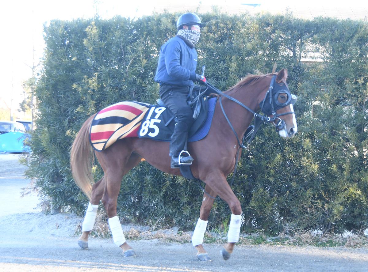 アンカーテソーロの馬体写真