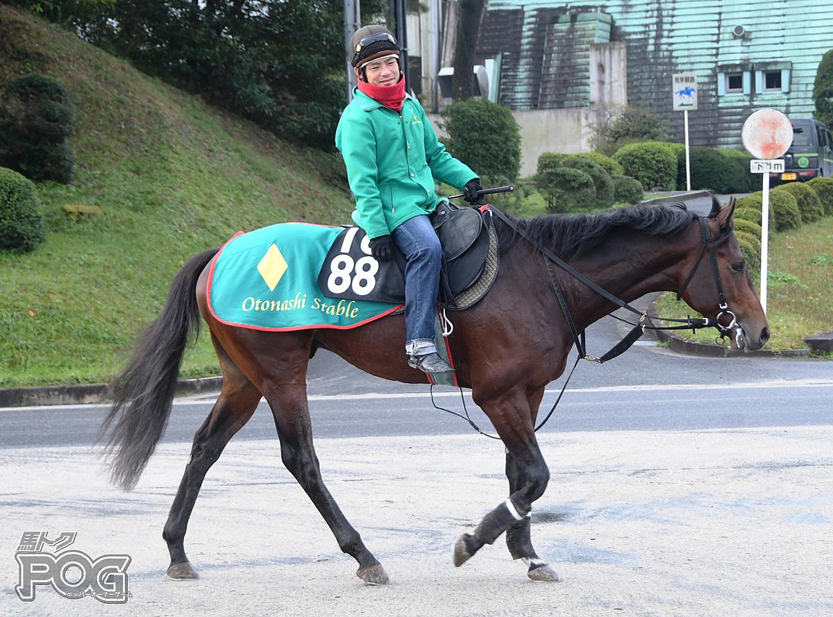 アメリカンエースの馬体写真