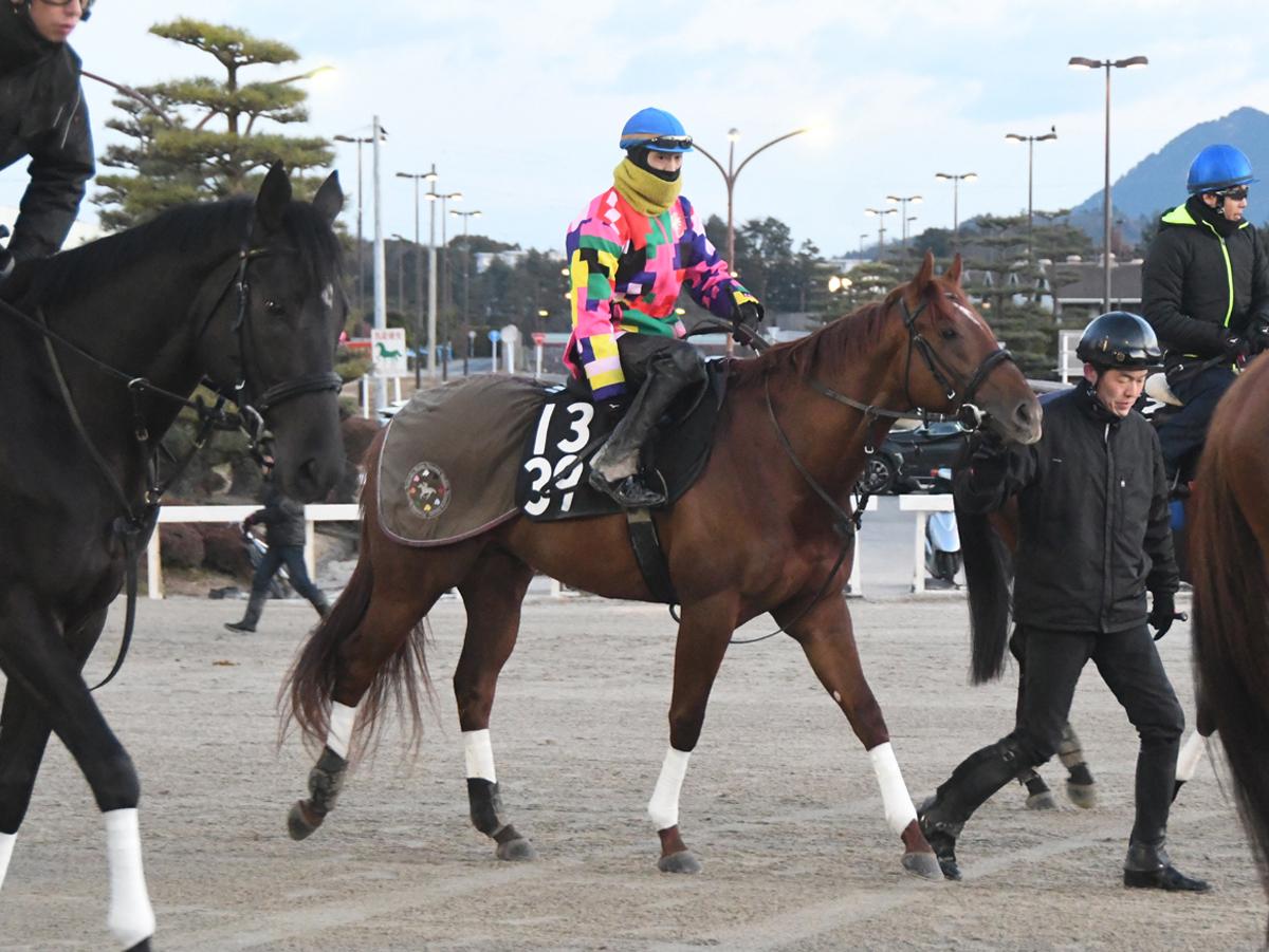 シヴァージの馬体写真