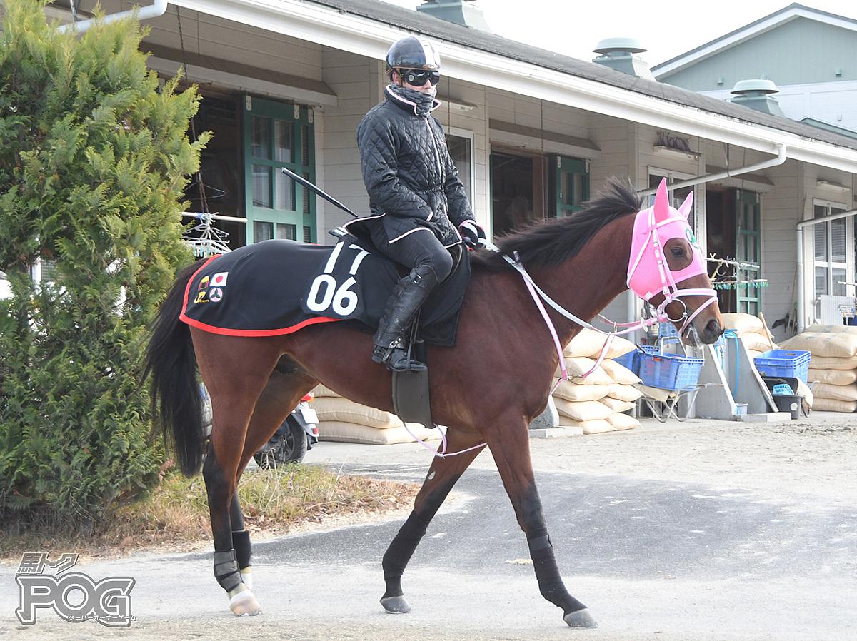 アポロテネシーの馬体写真