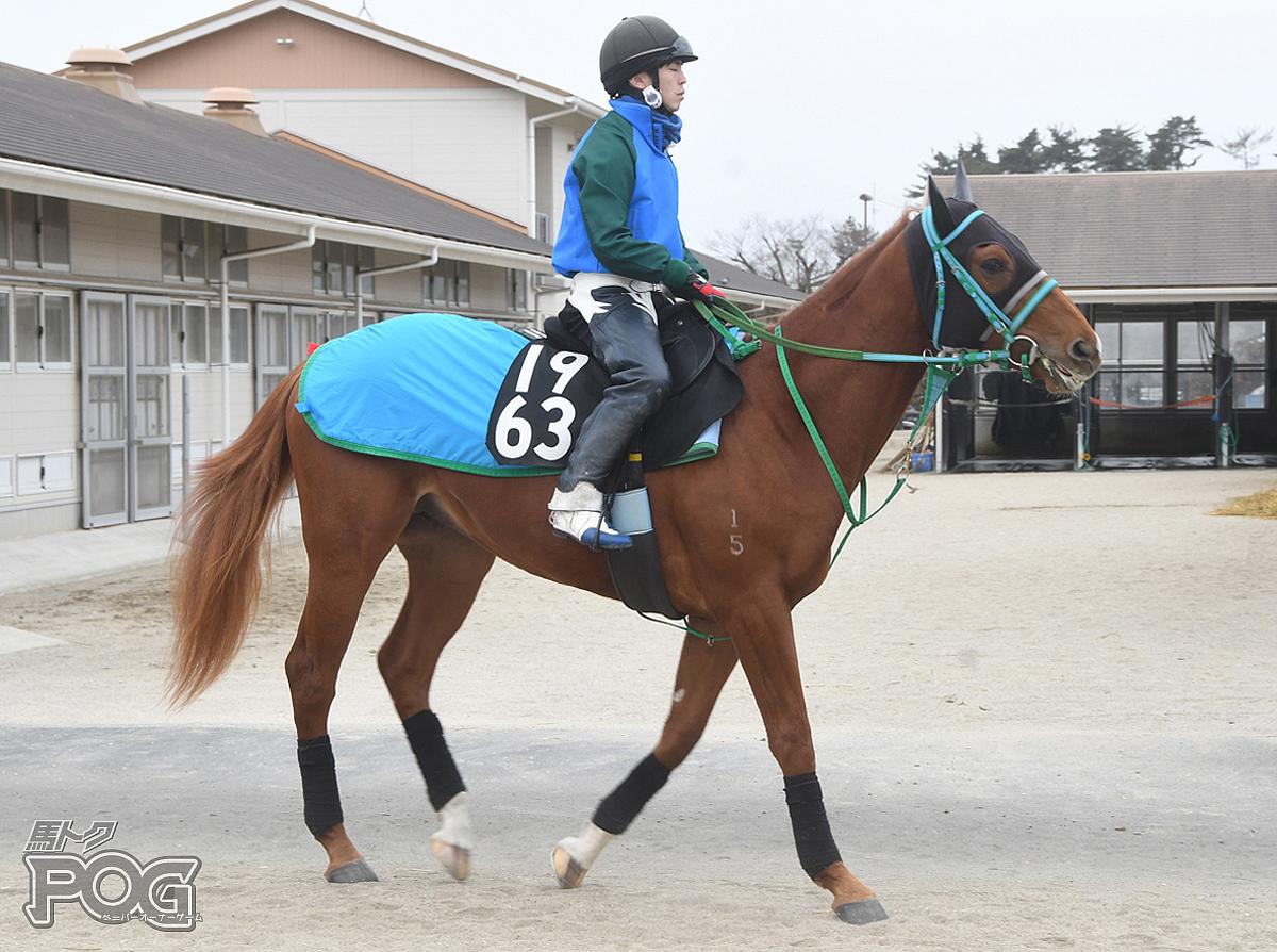 フラテッリの馬体写真