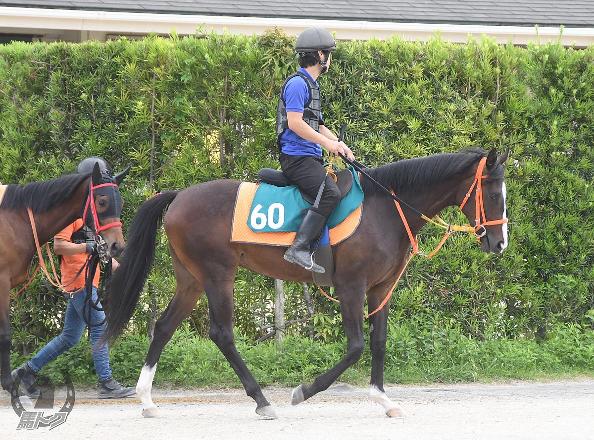 クニサキミッチイの馬体写真
