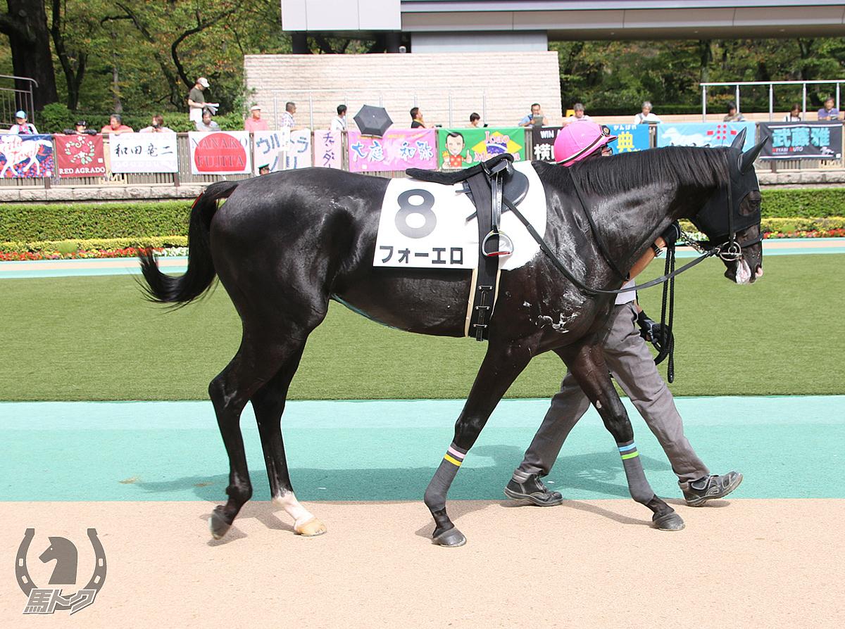 フォーエロの馬体写真