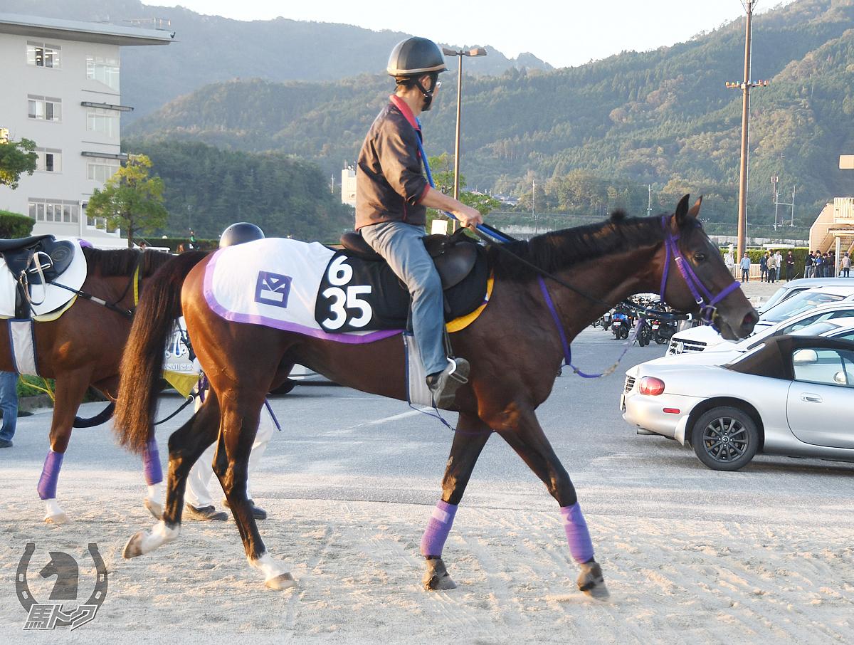 ツインイレブンの馬体写真