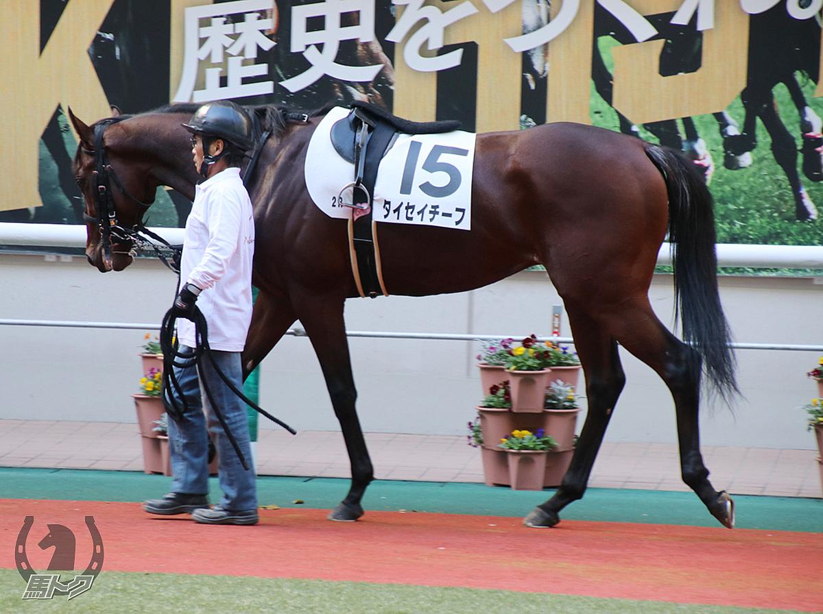 タイセイチーフの馬体写真