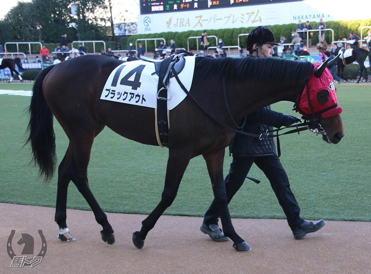 ブラックアウトの馬体写真