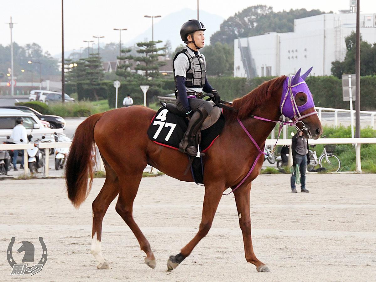 シンゼンマックスの馬体写真