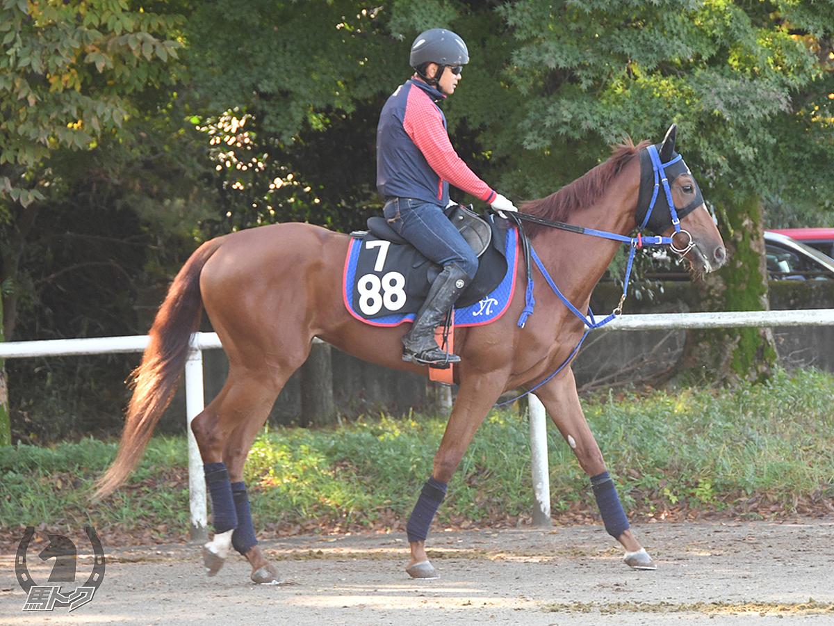 バンカーズギャルの馬体写真