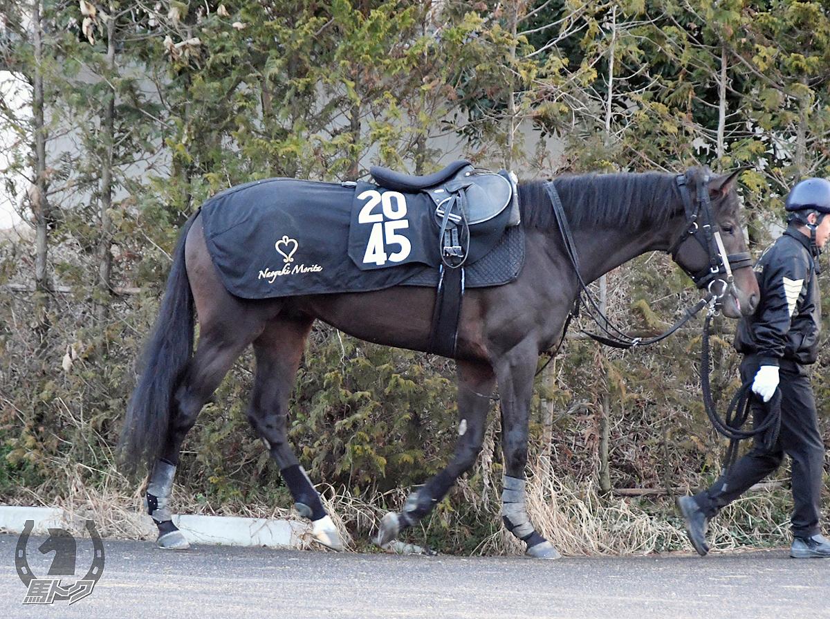 ディオーネプリンスの馬体写真