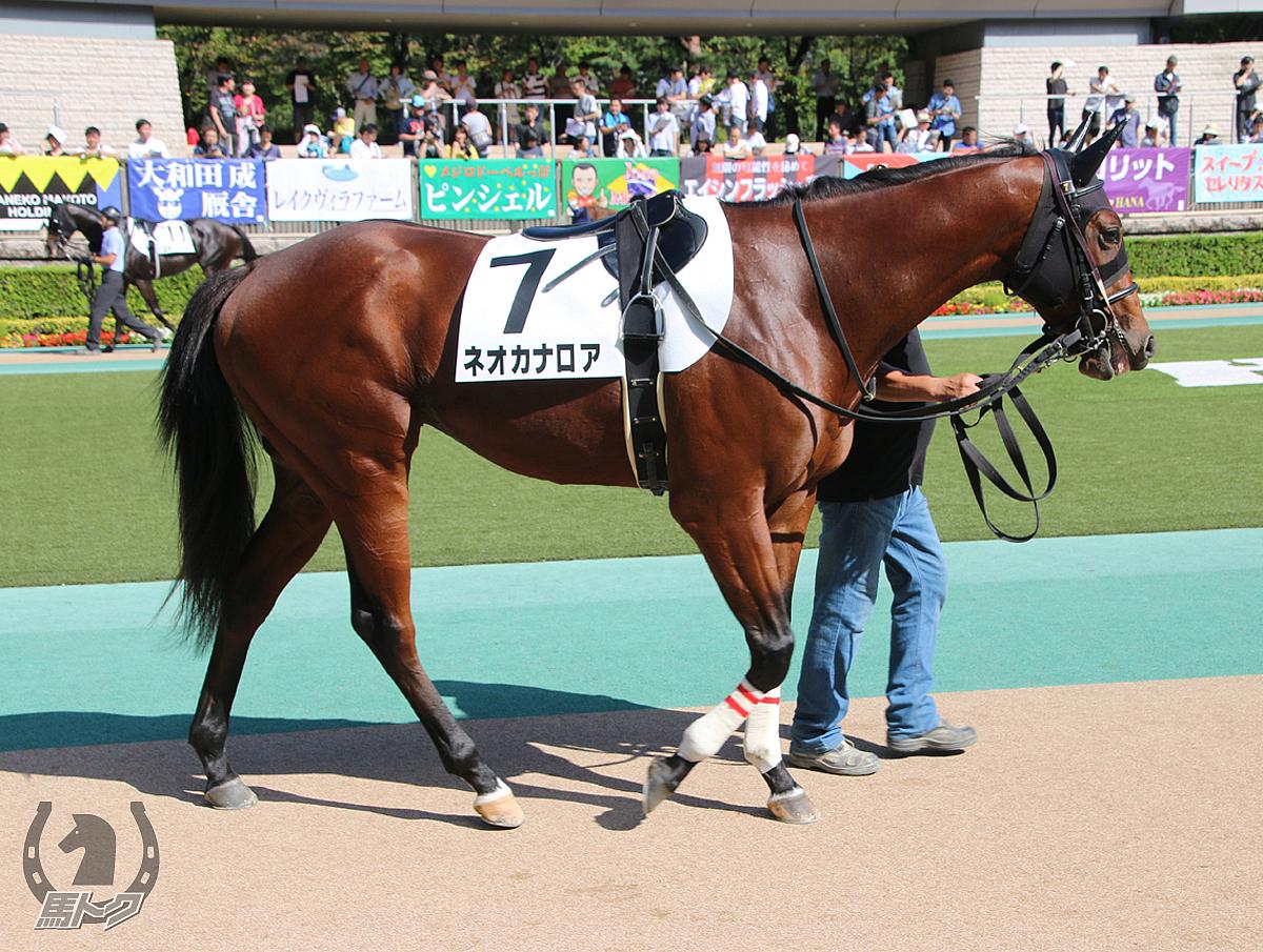ネオカナロアの馬体写真