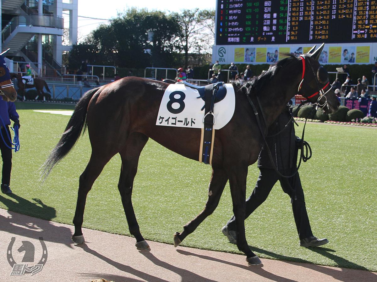 ケイゴールドの馬体写真