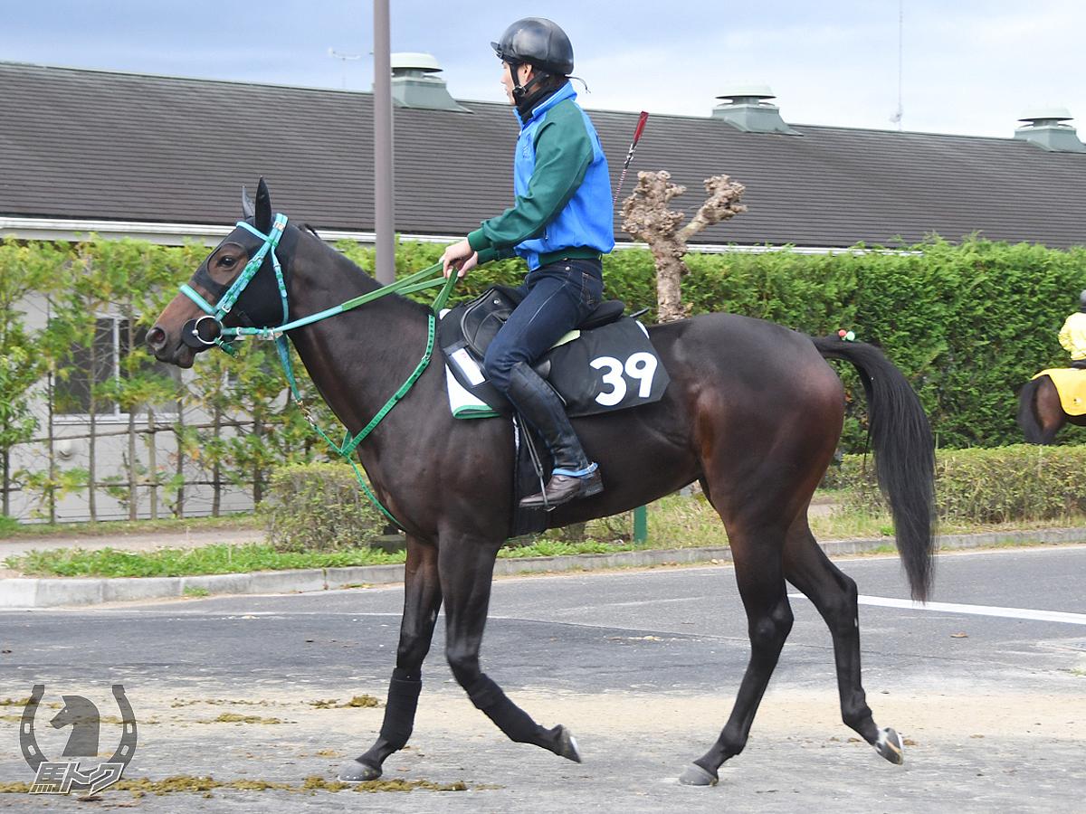 アドベントクランツの馬体写真