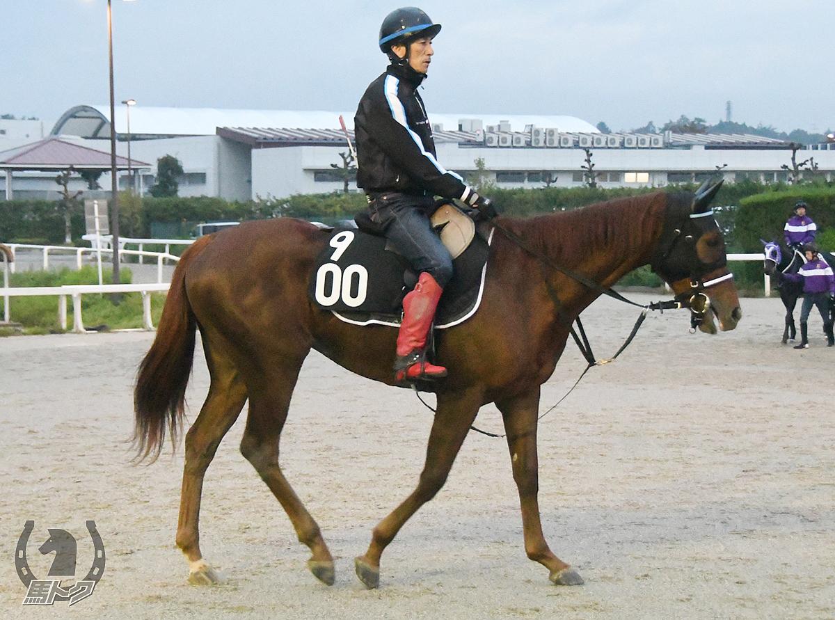 ブルベアロッソの馬体写真