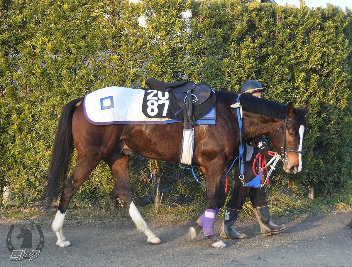 オリエンタルハートの馬体写真