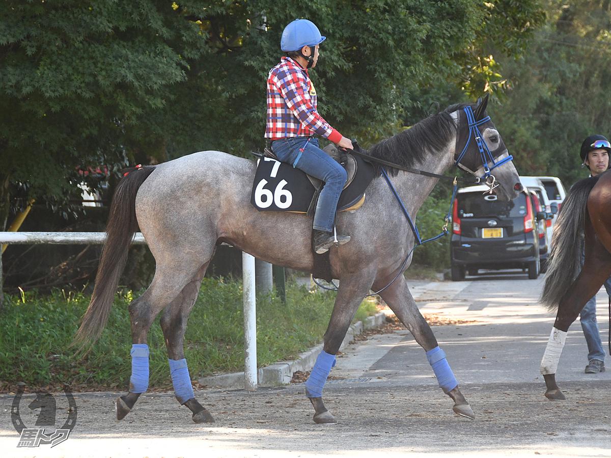 ハクユウフライヤーの馬体写真