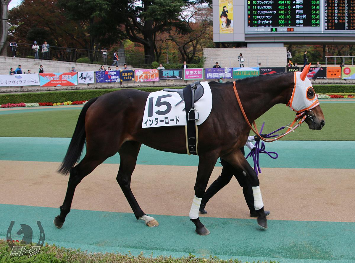 インターロードの馬体写真