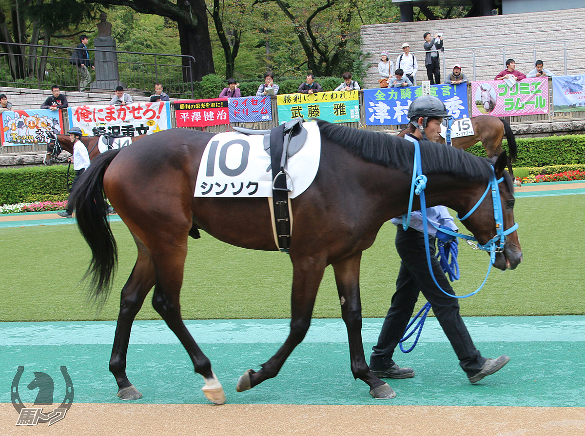 シンソクの馬体写真