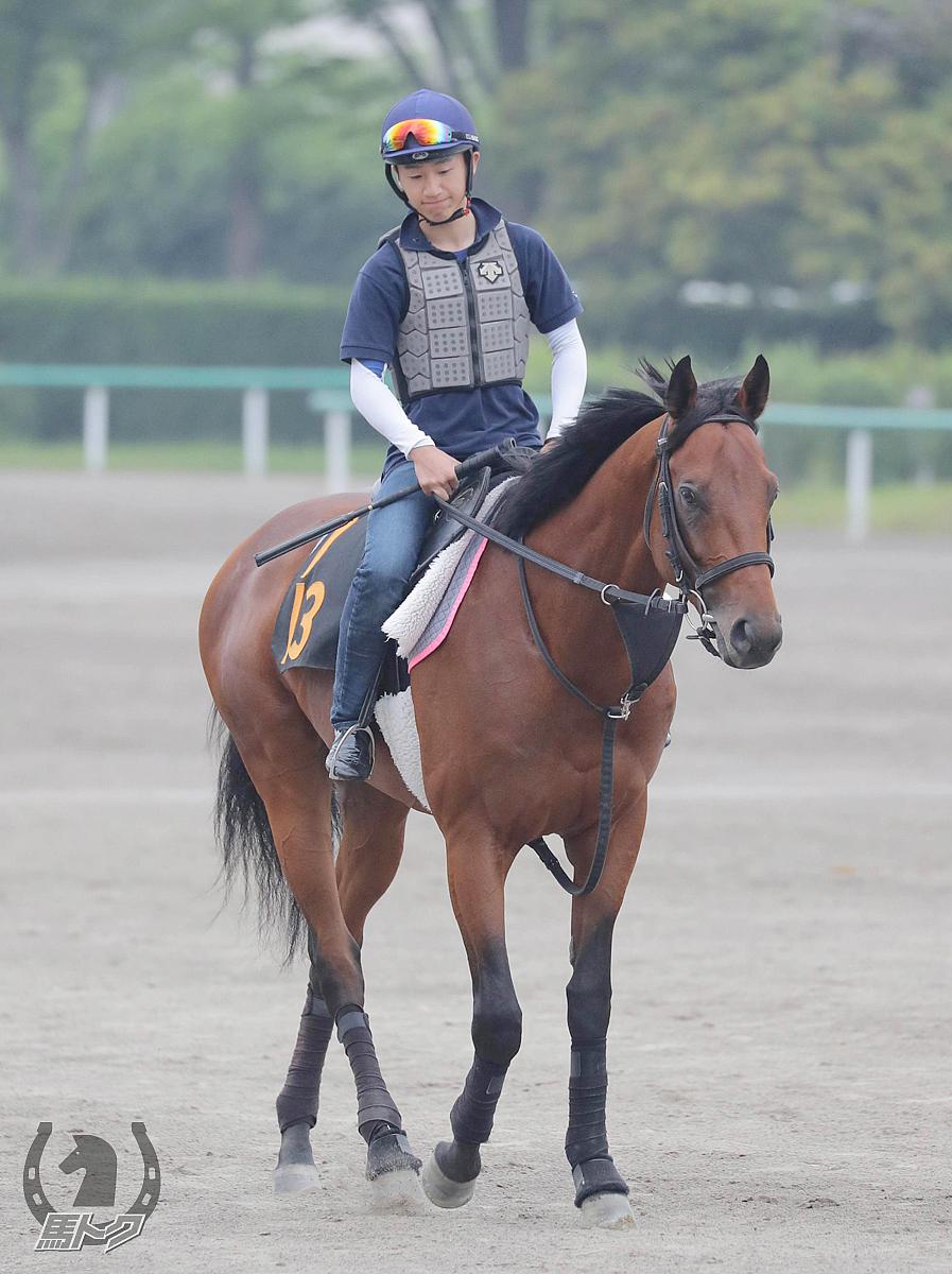 インテンスライトの馬体写真