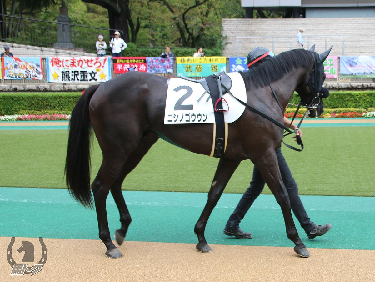 ニシノゴウウンの馬体写真