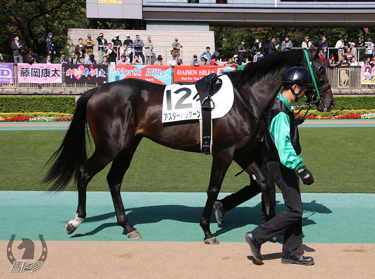アスターハリケーンの馬体写真