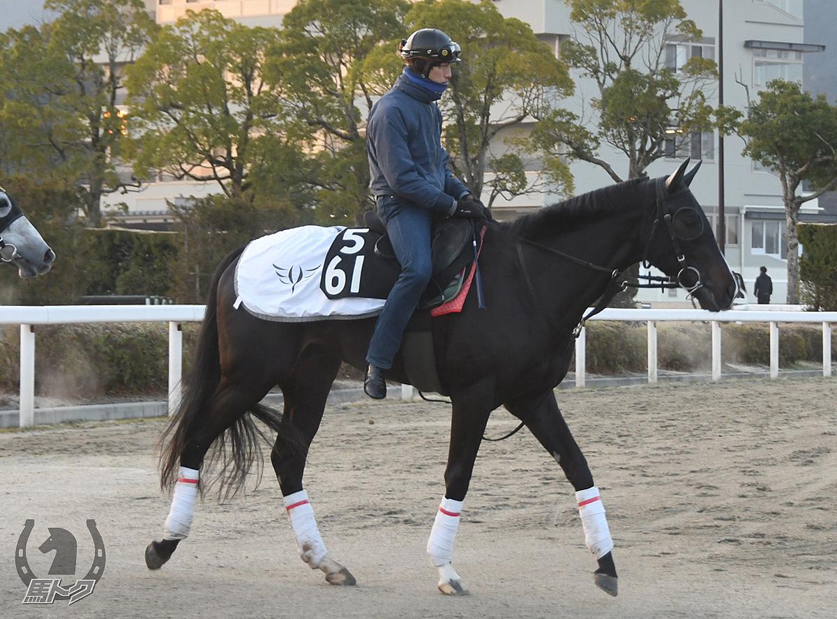 ダイシンクローバーの馬体写真