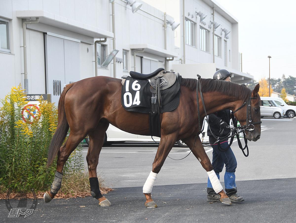 エイユーミッションの馬体写真