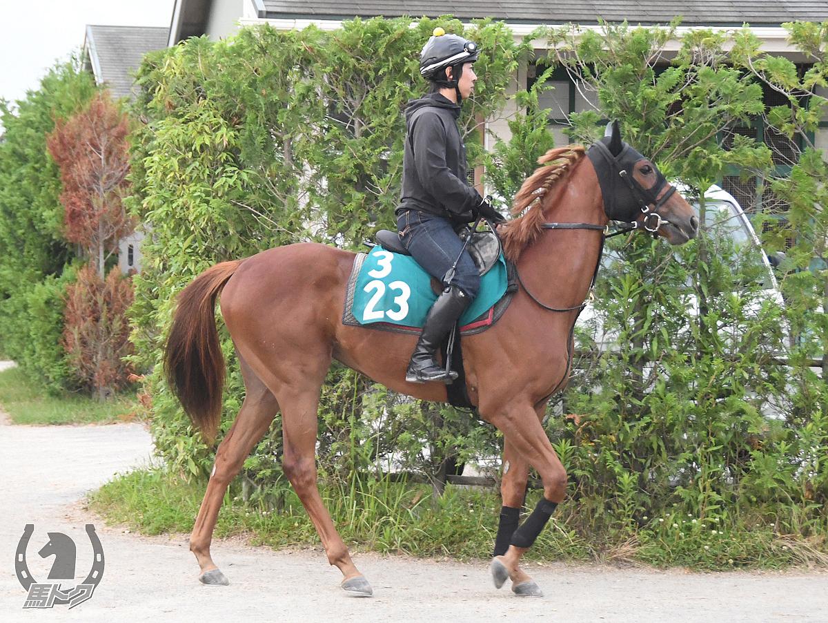 コルツァの馬体写真
