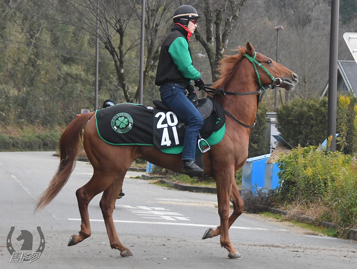 カフジサターンの馬体写真