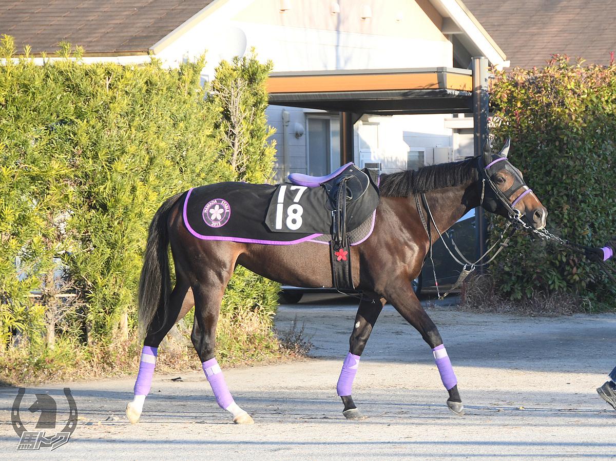 ジュリアヴィーナスの馬体写真