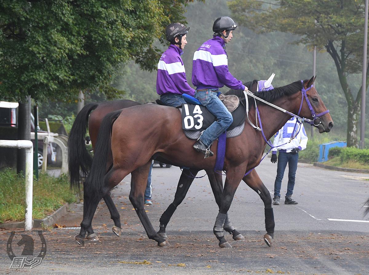 エーティーキンセイの馬体写真