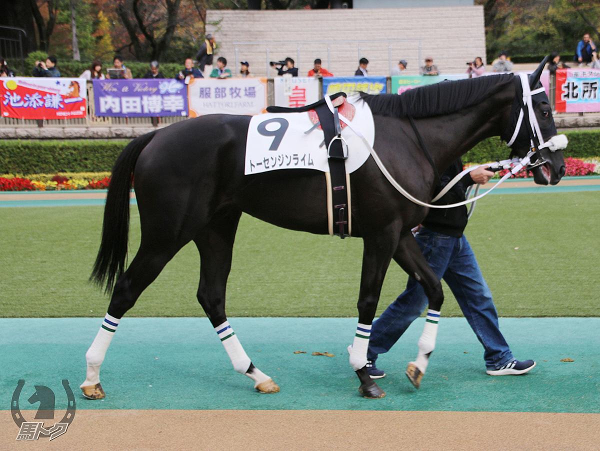 トーセンジンライムの馬体写真
