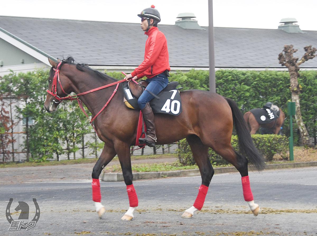 ニャーゴの馬体写真